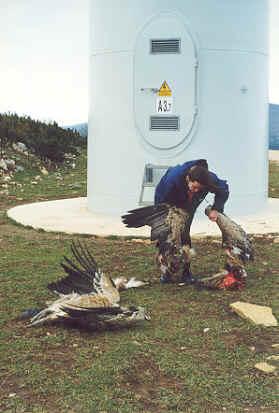 griffon-vultures-navarre-spain